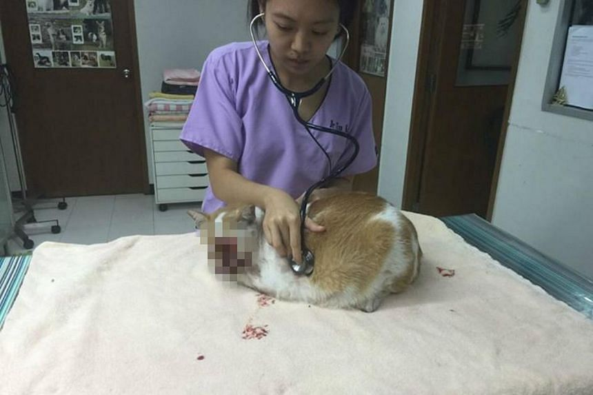 Affectionately known as Ginger, the seven-year-old cat was found with serious head injuries by a group of office workers in the basement car park of Bylands Building at Middle Road.
