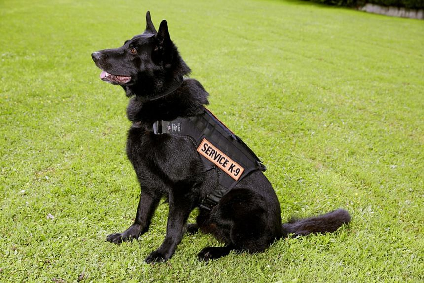 Izzy, a five year-old german shepherd, has been trained to sense the crisis 20 minutes before it sets in.