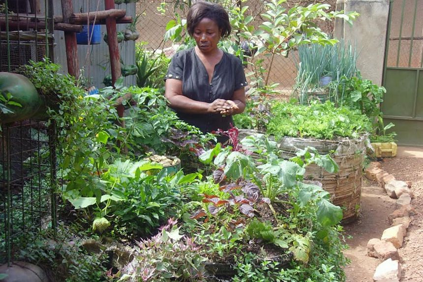 """Ms Harriet Nakabaale's """"sack farm"""" in her small compound provides both food for her family and income from seedling sales."""