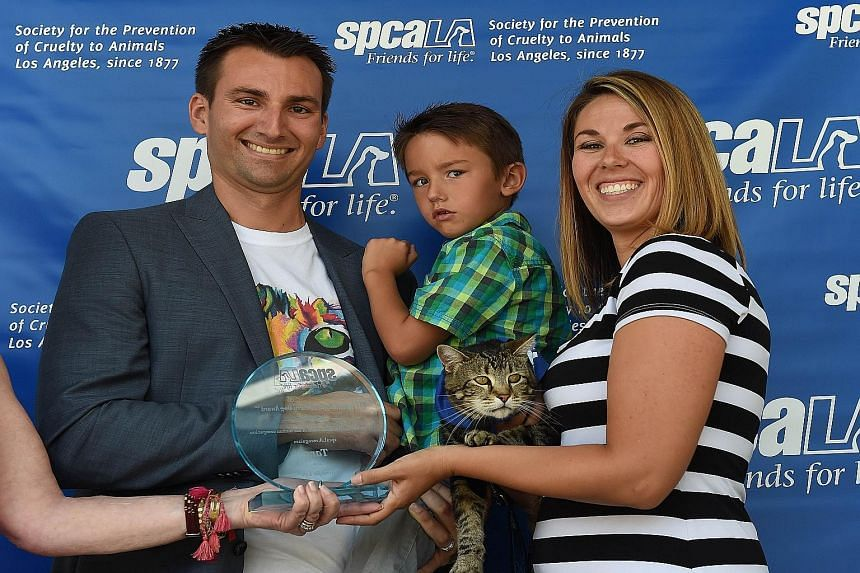 Mr Roger Triantafilo and his wife Erica with their son Jeremy and the family's hero Tara. The tabby has won recognition for its heroism after chasing off a dog which attacked Jeremy last year. Tara's bravery was captured on CCTV camera and the clip p