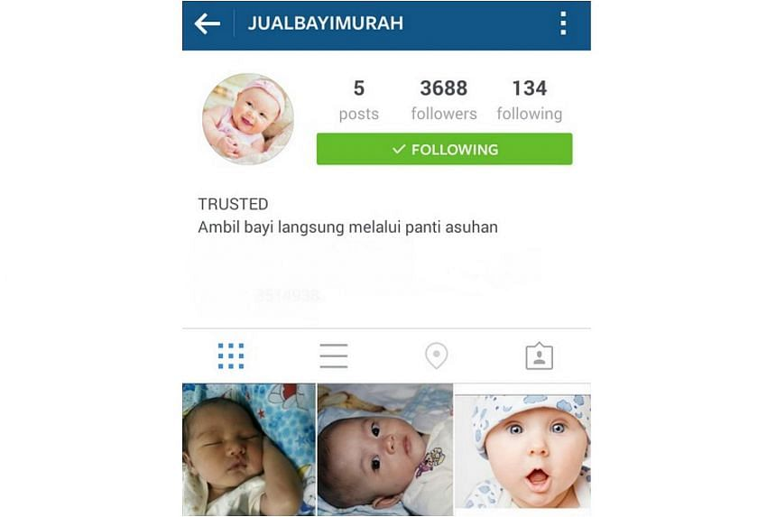Profile page of user @jualbayimurah on Instagram who is offering babies for sale.