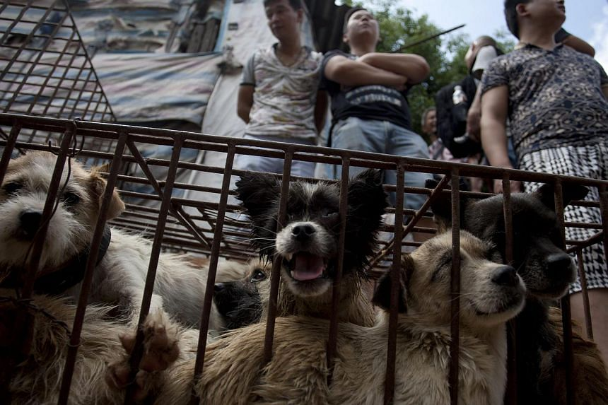 Dogs look out from inside a cage at a market in Yulin in south China's Guangxi Zhuang Autonomous Region, on June 21, 2015.