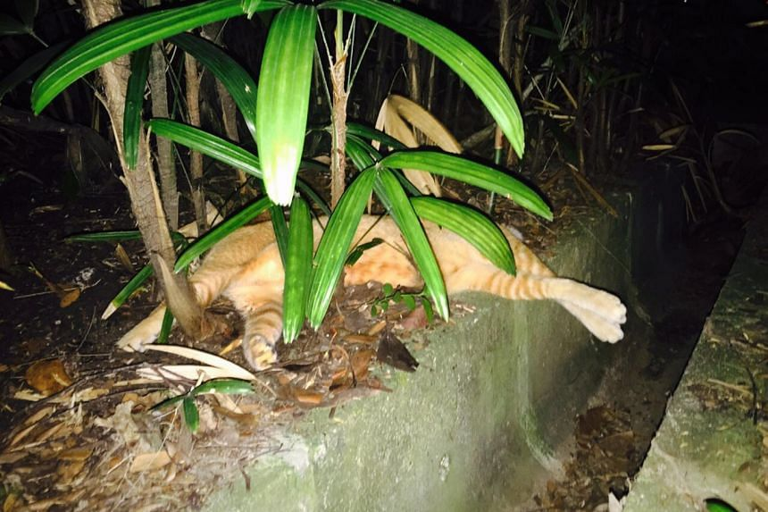 One of the cats found dead at Pasir Ris Park. The animals are suspected to havedied from eating poisoned fish crumbs.