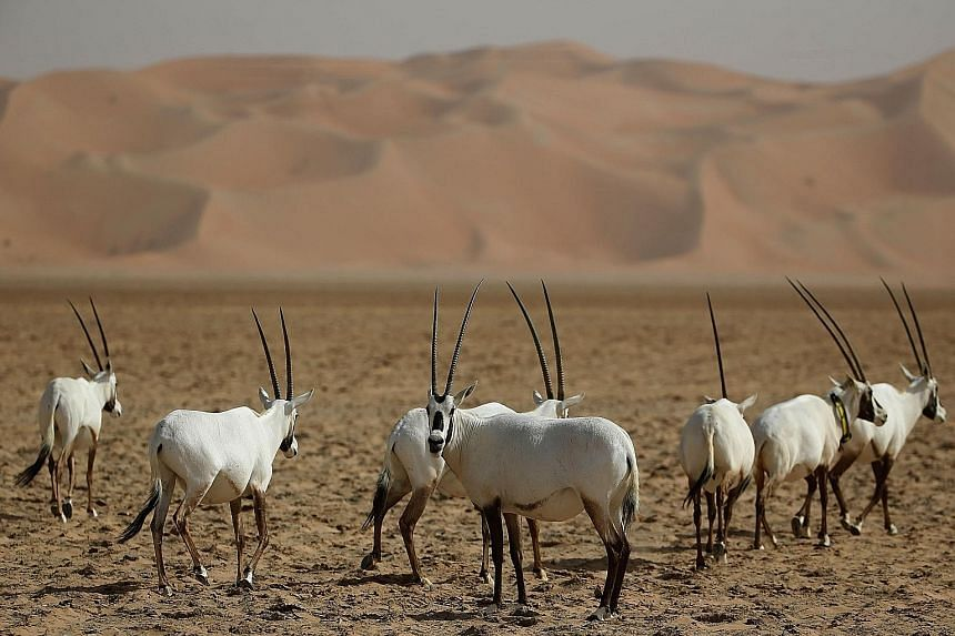 The US FTA with Oman led to stronger protection of species like the Arabian oryx (left). The trade of live wild animals such as the pangolin (right) causes some of the worst suffering imaginable. Animals are often packed into tight spaces, without fo