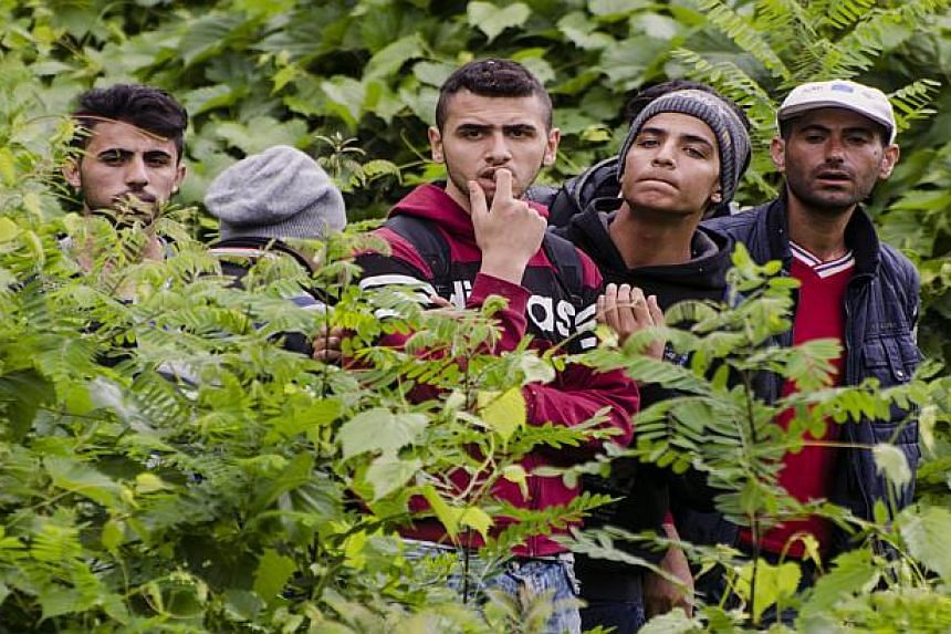 Migrants are pictured at the green border between Hungary and Serbia near Szeged, Hungary, on June 23, 2015.