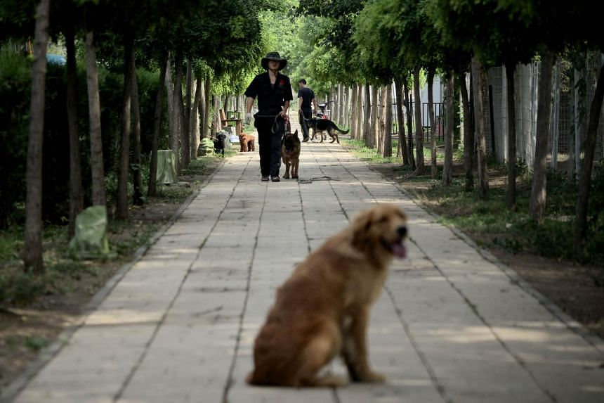 A dog at a training school in Beijing. Pet ownership has grown rapidly in China over the past decade, with almost 30 million households now owning a dog.