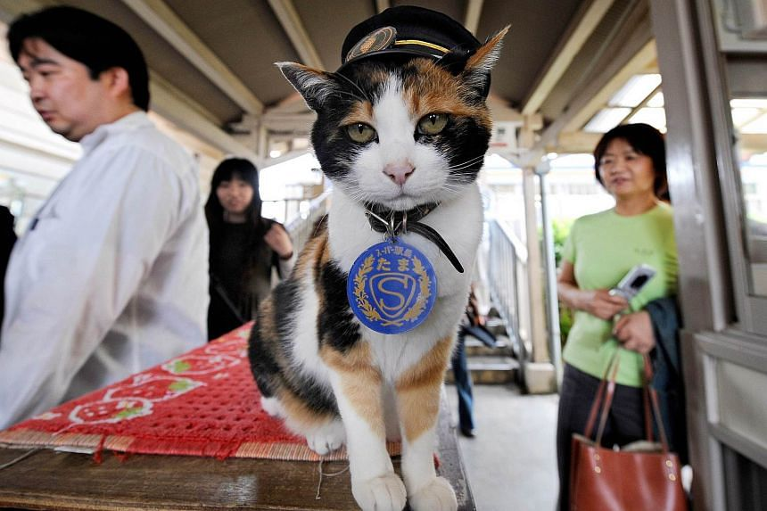 Tama, a cat that served as nominal stationmaster on an obscure Japanese branchline, has died a railways spokesman said on Thursday, June 25, 2015.