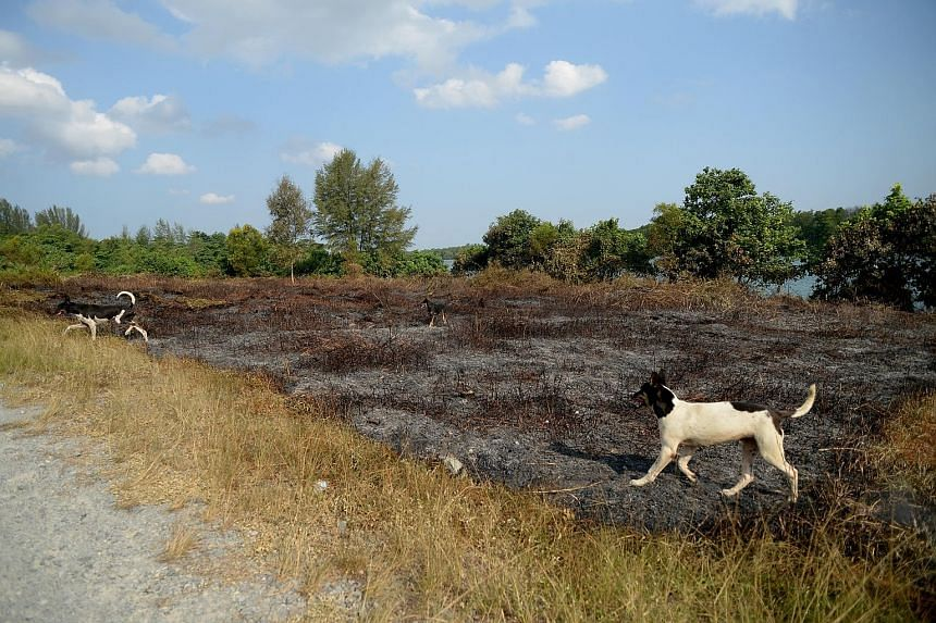 Pockets of fire broke out in an area the size of about two football fields, near the popular Ketam cycling trail on Pulau Ubin, on Wednesday night. No one was hurt or needed to be evacuated and the cause of the fire is being investigated.