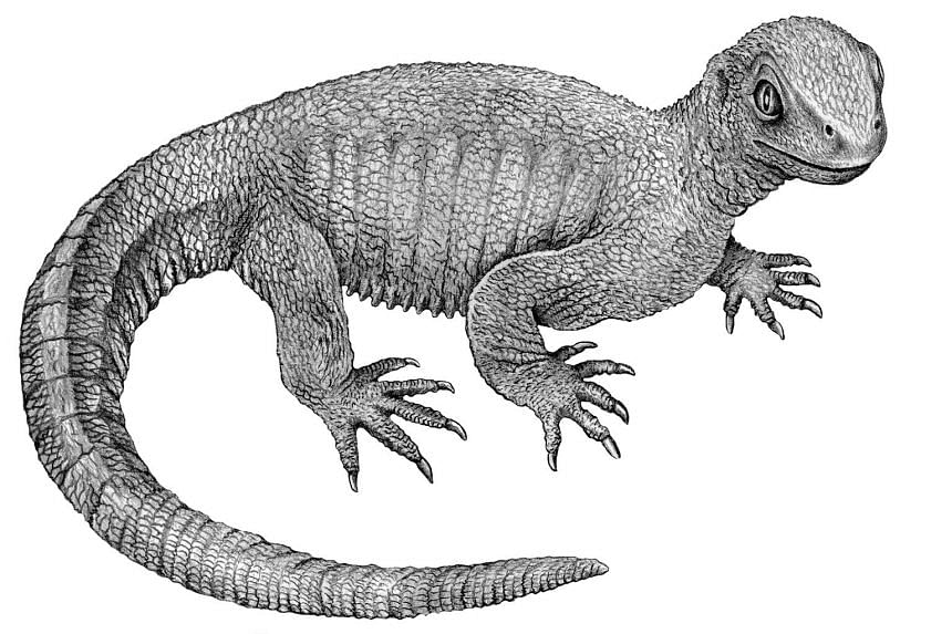 An artist's reconstruction of the stem-turtle Pappochelys from 240-million-year-old fossils.