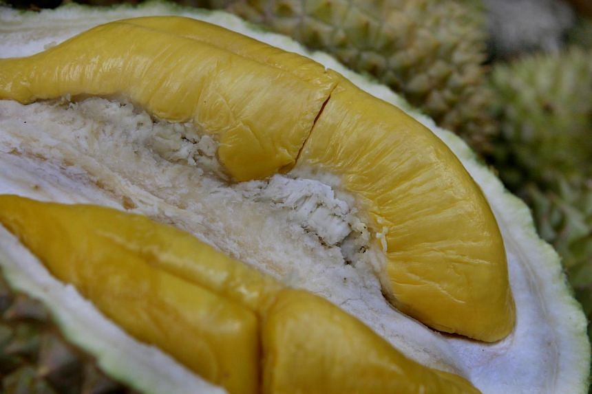 The Mao Shan Wang durian, which is also known as Butter durian, Cat Mountain King or Rajah Kunyit, is known for its bittersweet taste and creamy texture.