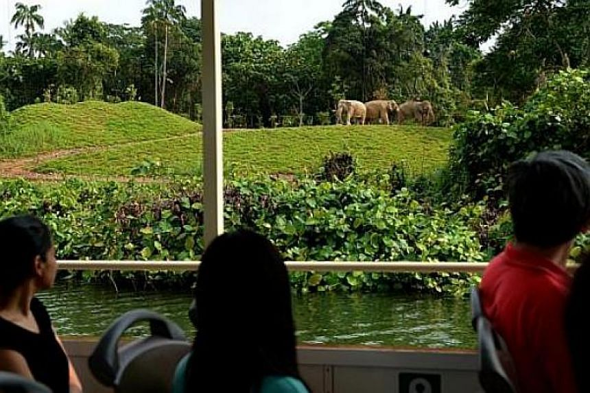 Launch of the new River Safari cruise which will take visitors along the Upper Seletar Reservoir to enjoy the blue skies, surrounding forest and have a chance to spot wildlife.
