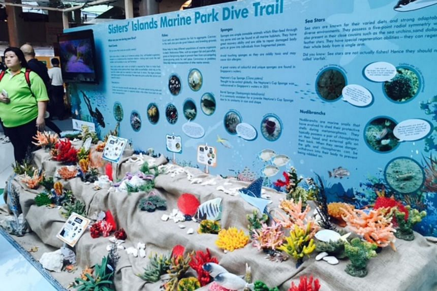 Marine habitats such as coral reef or sandy seabed ecosystems, and the plants and animals associated with them, will be better protected under a new Marine Conservation Action Plan launched by the Government on Saturday morning.