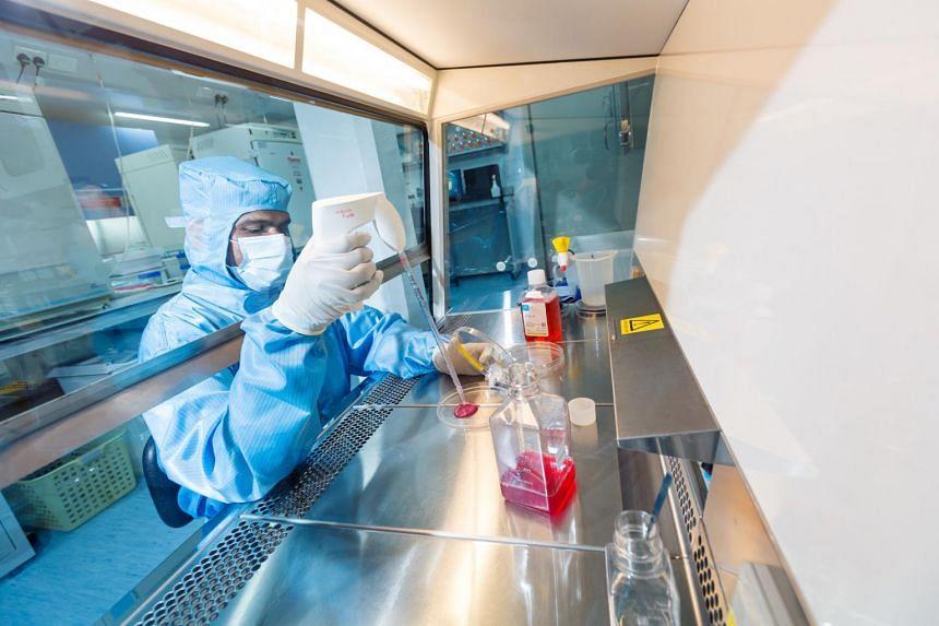 Senior research fellow Jeyakumar Masilamani processing umbilical cord tissue at the CellResearch laboratory.