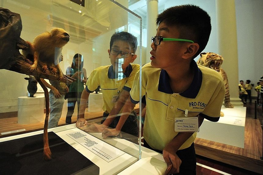 Interactive exhibits (above) at the Singapore Art Museum fascinate both children and adults alike, and Once Upon A Time In Asia: The Animal Race at the Asian Civilisations Museum features five real-life specimens, including a golden monkey (left).
