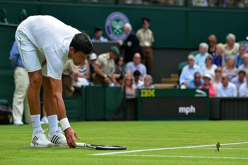 Novak Djokovic trying to usher a bird to safety after it had gatecrashed his first-round clash with Philipp Kohlschreiber. The world No. 1 hit 12 aces and 36 winners.