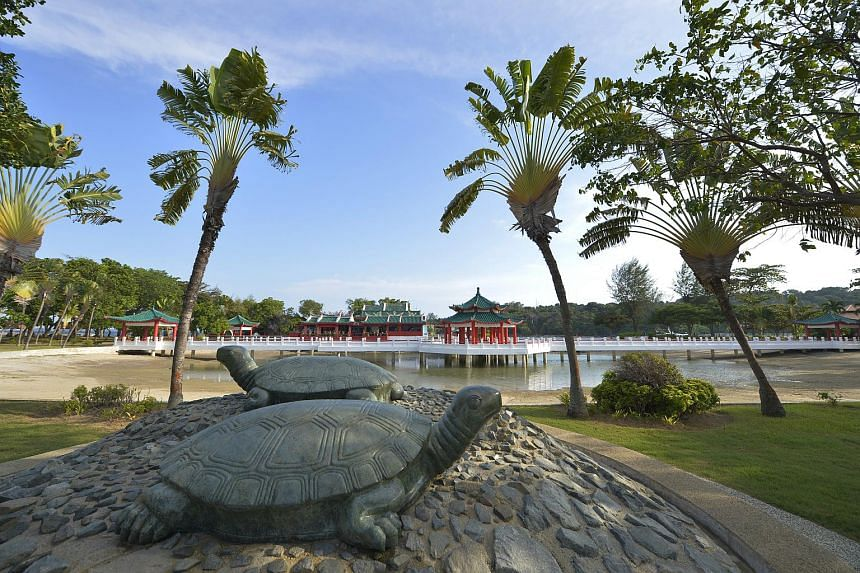 The iconic turtles of Kusu Island.