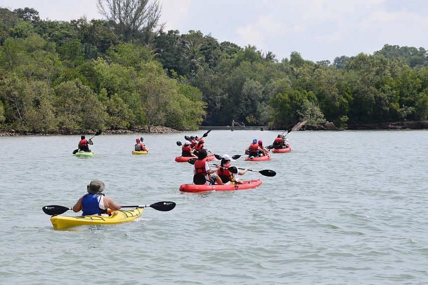 Join a mangrove kayaking expedition at Pulau Ubin.