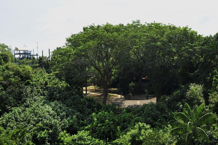 The lush greenery of the Mount Imbiah Nature Reserve, home to more than 30 species of trees.