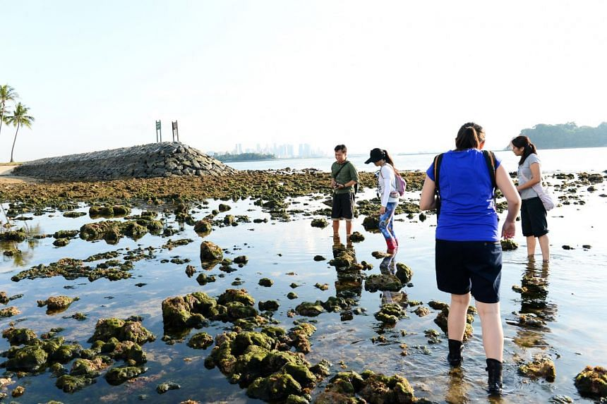 The NParks' free guided walk to the Sisters' Islands during low tides is a good way to explore the area's marine life.