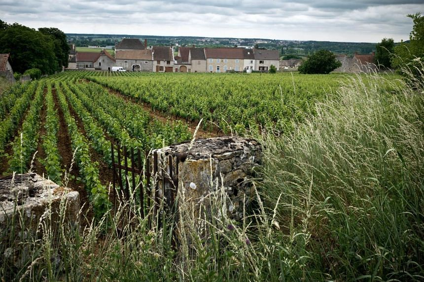 Vineyards in Chassagne-Montrachet, eastern France, now part of a Unesco world heritage site.