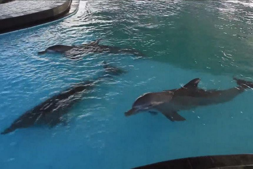 Petition to free four dolphins kept in cramped Bali pool ...