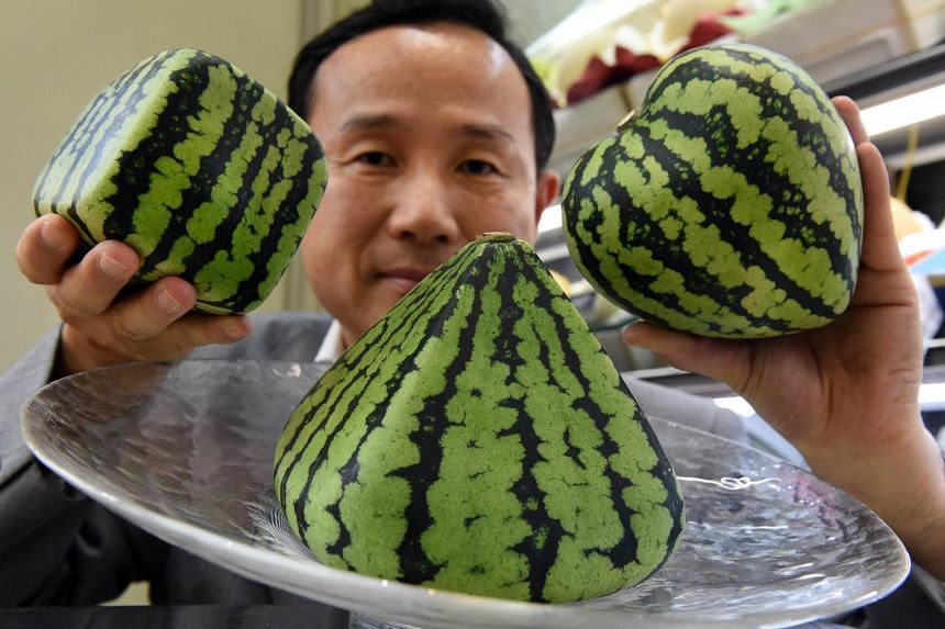 Odd-shaped watermelons can fetch nearly 13,000 yen.