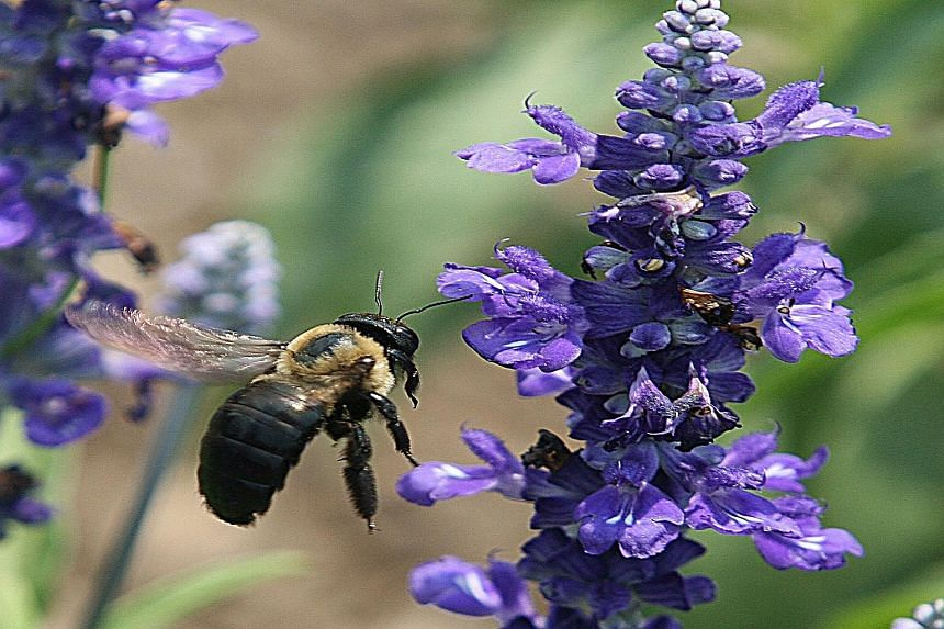 A report in the journal Science is the first to point to the role of climate change in worldwide bee decline.
