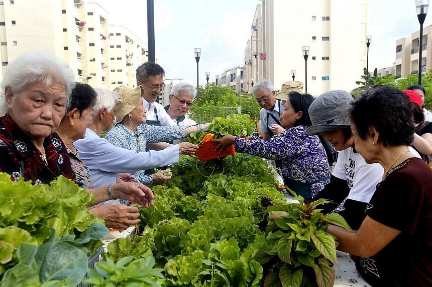50 community gardens will be given a one-time grant to support gardeners in organising the SG50 Garden Parties and to reach out to 5,000 vulnerable residents and Pioneer Generation citizens.