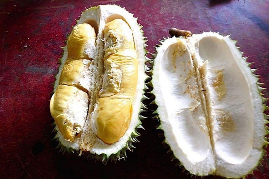 ORGANIC DRAW: Hor lor (gourd) durian.