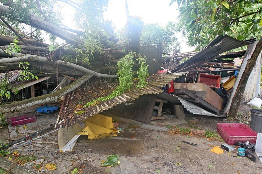 A tree fell during a storm on Tuesday morning, damaging parts of kampung-style coffee shop 398 canteen which has been in business since 1969.
