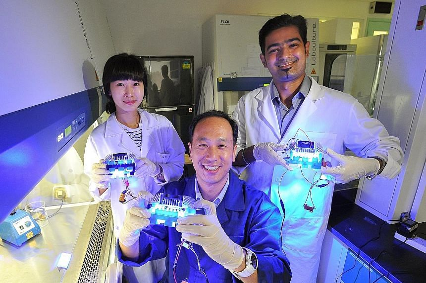 Dr Yuk Hyun Gyun (centre), with PhD students Kim Min Jeong, 28, and Vinayak Ghate, 26, showing the LED light boxes in their laboratory.