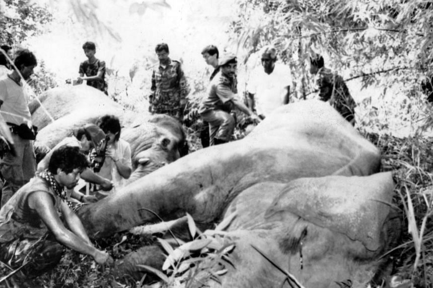 Wild elephants being rounded up by a Malaysian wildlife team on Pulau Tekong. First sighted there by NSmen in May 1990, they had apparently swum across from Johor. They were later relocated to the Endau Rompin National Park in Malaysia.
