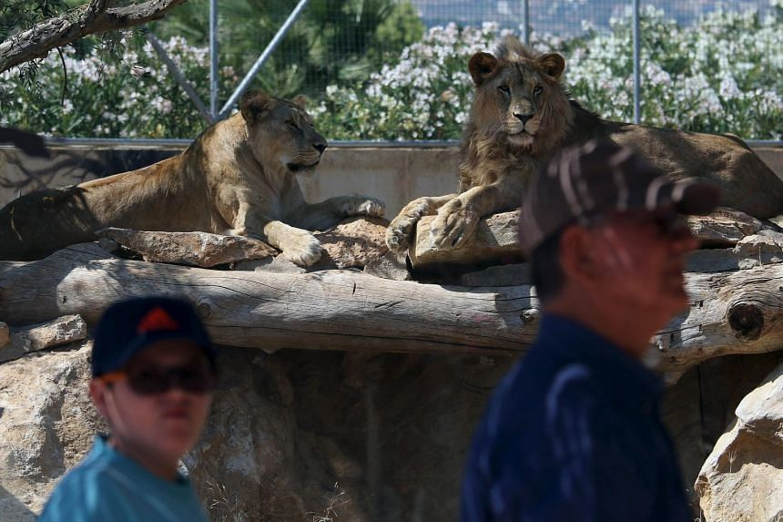 Visitors look on while lions lie inside their enclosure during a hot summer day at a zoo in Spata near Athens, Greece on July 16, 2015.