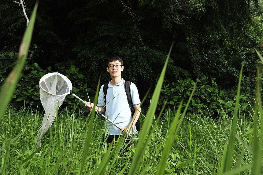 Mr Tan Ming Kai's interest in crickets started when he was in kindergarten, when he would catch and keep them in plastic containers as pets. He made his first discovery in 2011 with a katydid which he named Asiophlugis temasek. He also named another