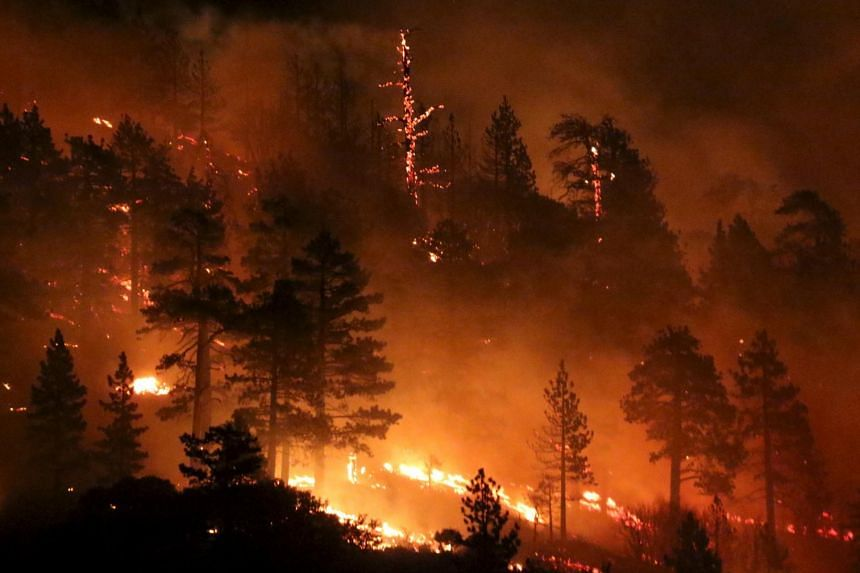 Los Angeles county firefighters battle wild land fire call the Pine Fire in Wrightwood, California on July 17, 2015.