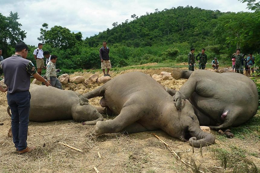 A Thai farmer has been arrested after he confessed to erecting an electrified fence that killed three elephants close to a national park, police said. The animals were found dead on Wednesday near a village pond outside the Kaeng Krachan national par