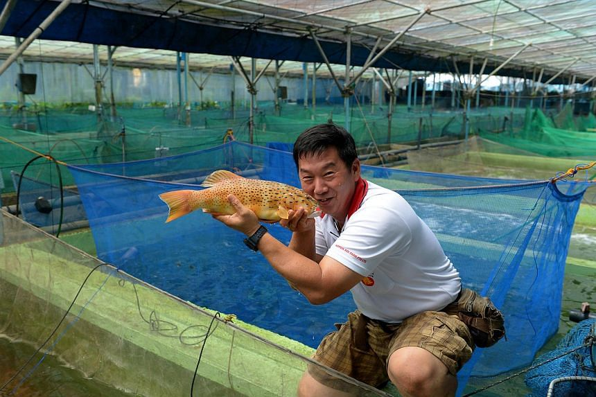 Pay Bok Sing, owner of Nippon Koi Farm.