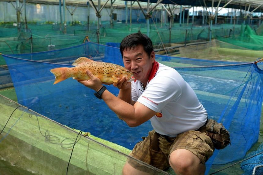 Mr Pay Bok Sing started rearing fish like grouper at his Nippon Koi Farm in 2013.