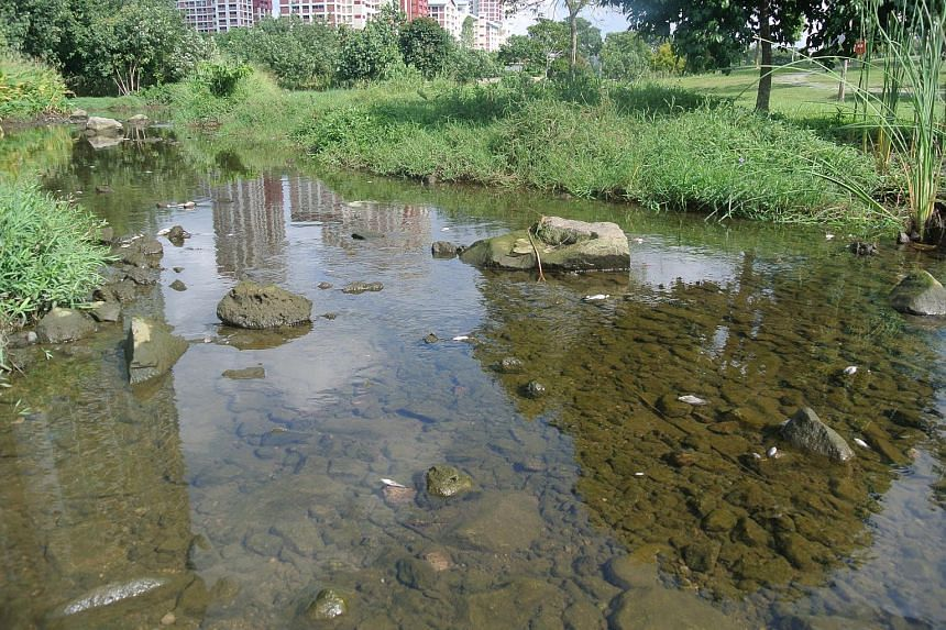 Residents who were there said that the fish were floating belly-up giving off a pungent smell which they could smell even from the nearby main road.