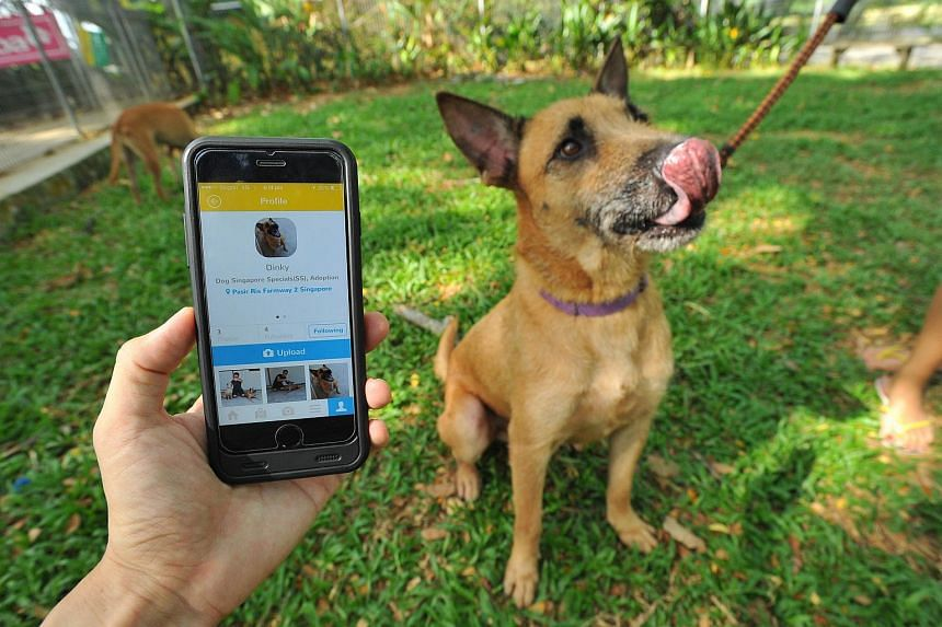 """Five of the shelter's dogs will be listed on Petfie with a """"For Adoption"""" status along with their photos and information."""