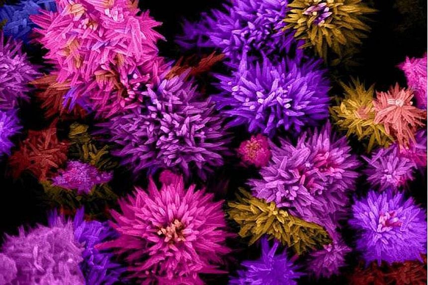 These nanoflowers are tiny, metallic compounds measuring only about 1 micrometer - about 100 times smaller than the thickness of a strand of human hair. Because they are so small, each nanoflower has a large surface area - increasing the rate of chem