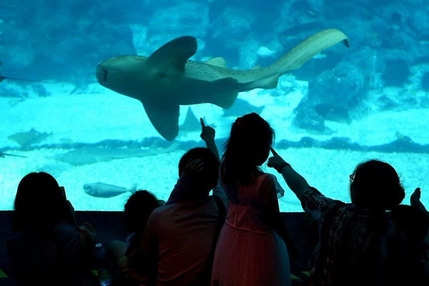 Tourists at the S.E.A  Aquarium. When TNP visited the aquarium at about 5pm yesterday, it was business as usual.