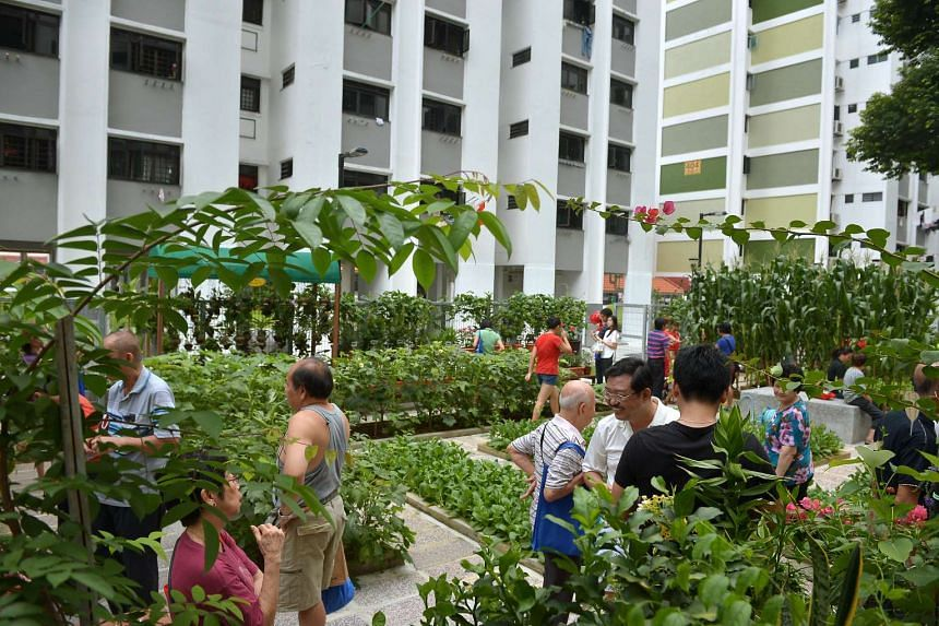 Residents viewing the vegetables grown in the community garden located between blocks 404 and 405 in Ang Mo Kio Avenue 10.
