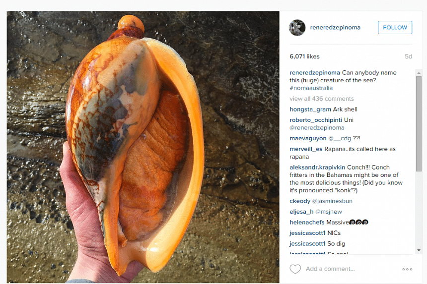 Ahead of his move to Sydney, Danish chef Rene Redzepi has shared teasing photos of sea creatures, including conch, on his Instagram feed.