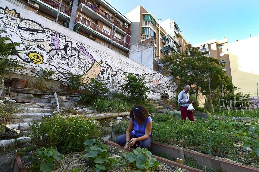 Volunteer gardeners weeding in the urban and community garden in Madrid. Thousands of such urban gardens have sprung up on abandoned building sites across Spain since the economic crisis started. They are usually tended by people who have lost their