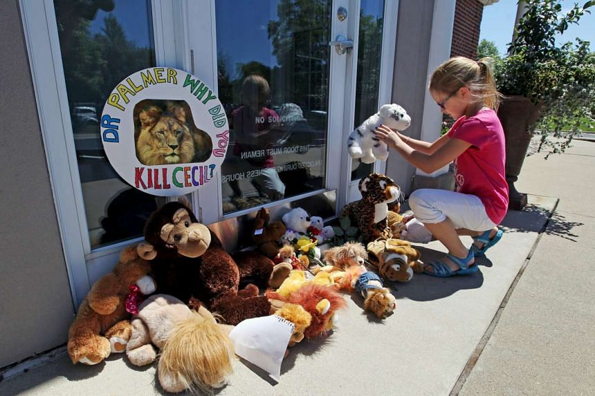 Resident Autumn Fuller, 10, placing a stuffed animal at the doorway of River Bluff Dental clinic in protest against the killing of Cecil, a famous lion in Zimbabwe.