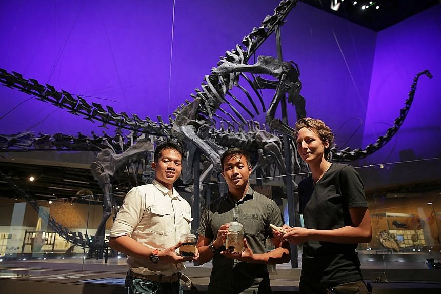 (From left) Mr Foo Maosheng, Mr Marcus Chua, and Ms Kate Pocklington are part of the team putting together the female sperm whale's remains for the Lee Kong Chian Natural History Museum. The whale measures 10.6m long and weighed between 8 and 10 tonn