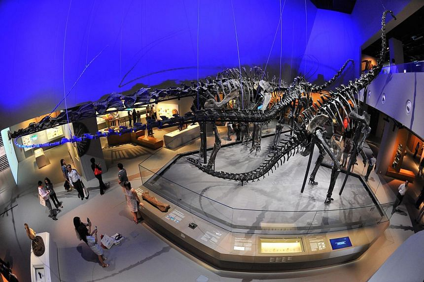 The Lee Kong Chian Natural History Museum, which houses three prized dinosaur skeletons and more than a million plant and animal specimens.