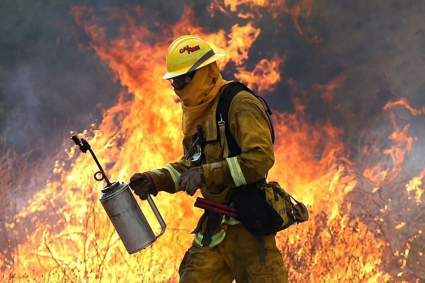 A Cal Fire firefighter moves away from a tall flame as he uses a drip torch to burn dry grass during a backfire operation to head off the Rocky Fire near Clearlake, California.