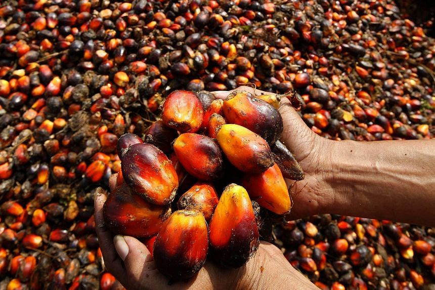 Wilmar's tropical oils unit - which cultivates and mills oil palm - was hit by a 15 per cent drop in pre-tax profit because of lower crude palm oil prices. Wilmar said it remains cautiously optimistic for this half of the year.